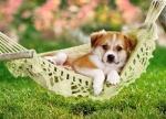 Castorland: пазл щенок 260 эл.