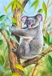 Castorland: пазл коала 120 эл.